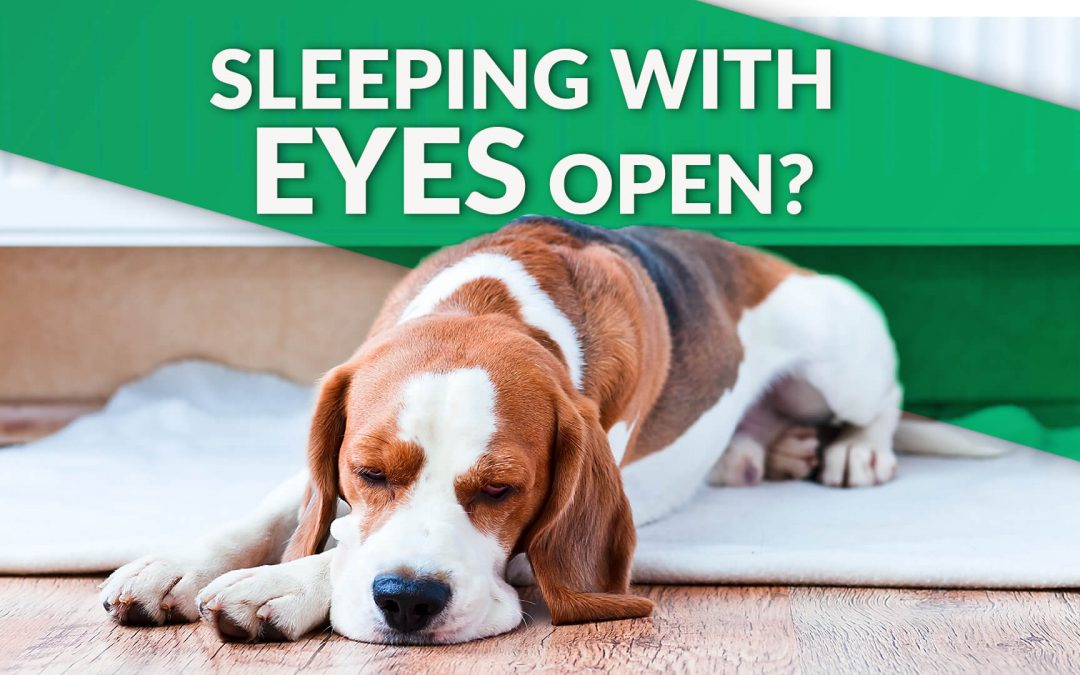 My Dog Sleeps With Eyes Open: Is Something Wrong?
