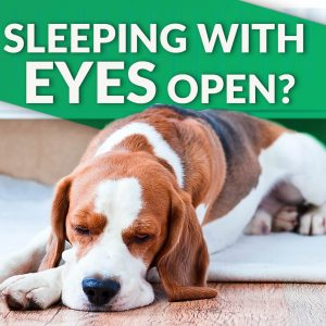 dog sleeps with eyes open
