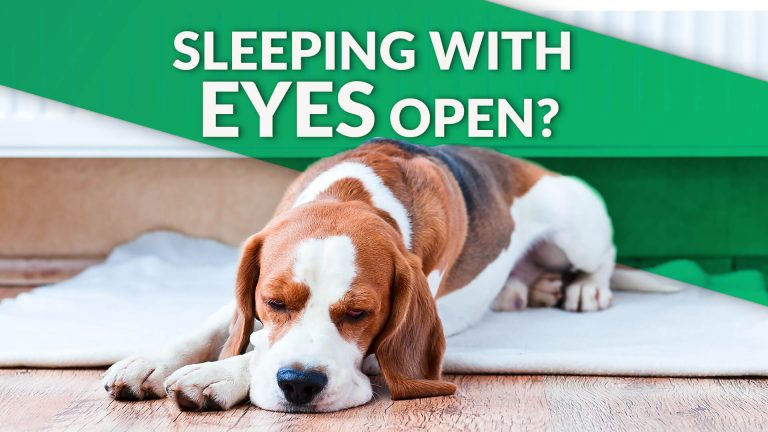 dog sleeps with eyes open