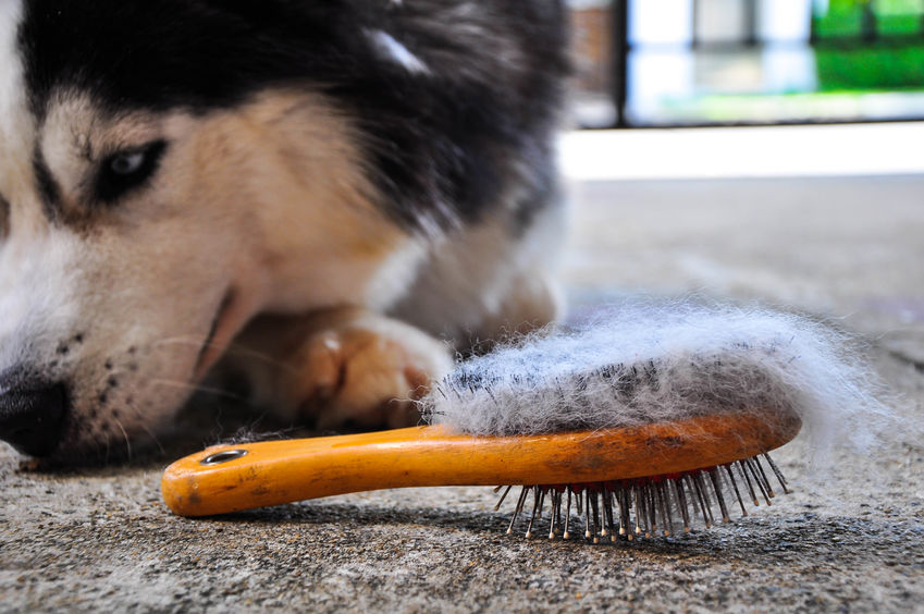 how to deshed a dog | Ultimate Pet Nutrition