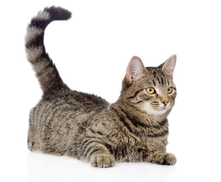 understanding cats | Ultimate Pet Nutrition