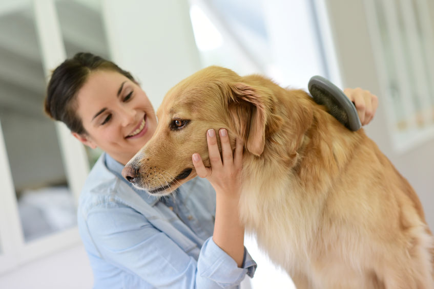 how to calm a nervous dog | Ultimate Pet Nutrition
