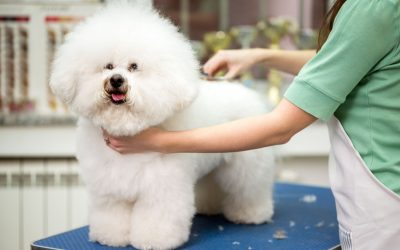 dog grooming tips | Ultimate Pet Nutrition