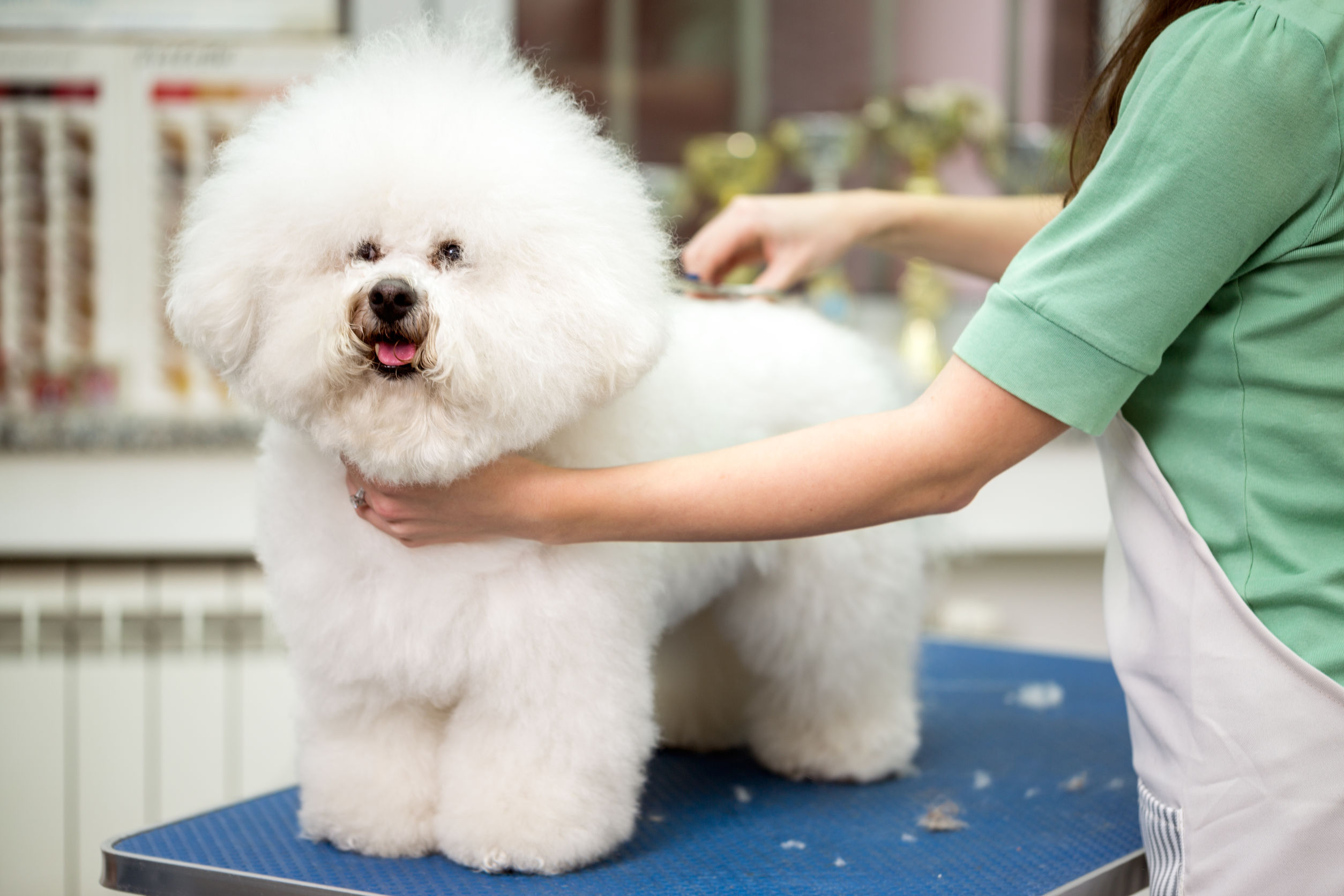 dog grooming tips   Ultimate Pet Nutrition