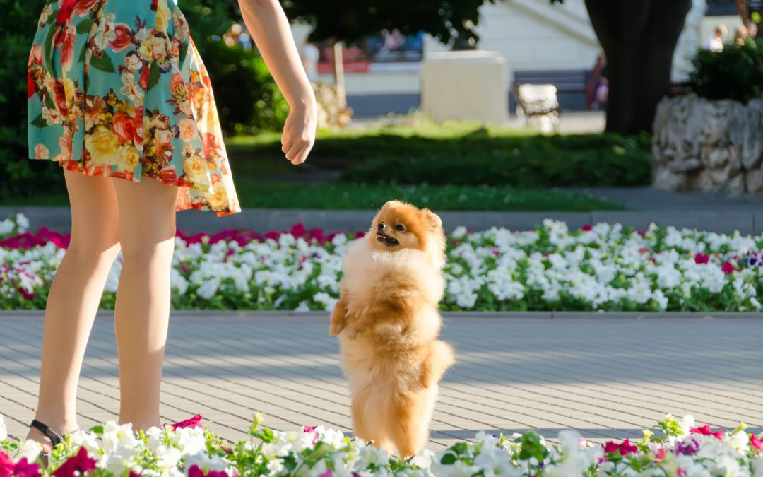 Dog Tricks and Pet Safety: Why Your Dog Shouldn't Be Walking On Their Hind Legs