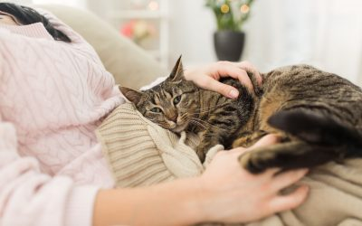 are cats loyal | Ultimate Pet Nutrition