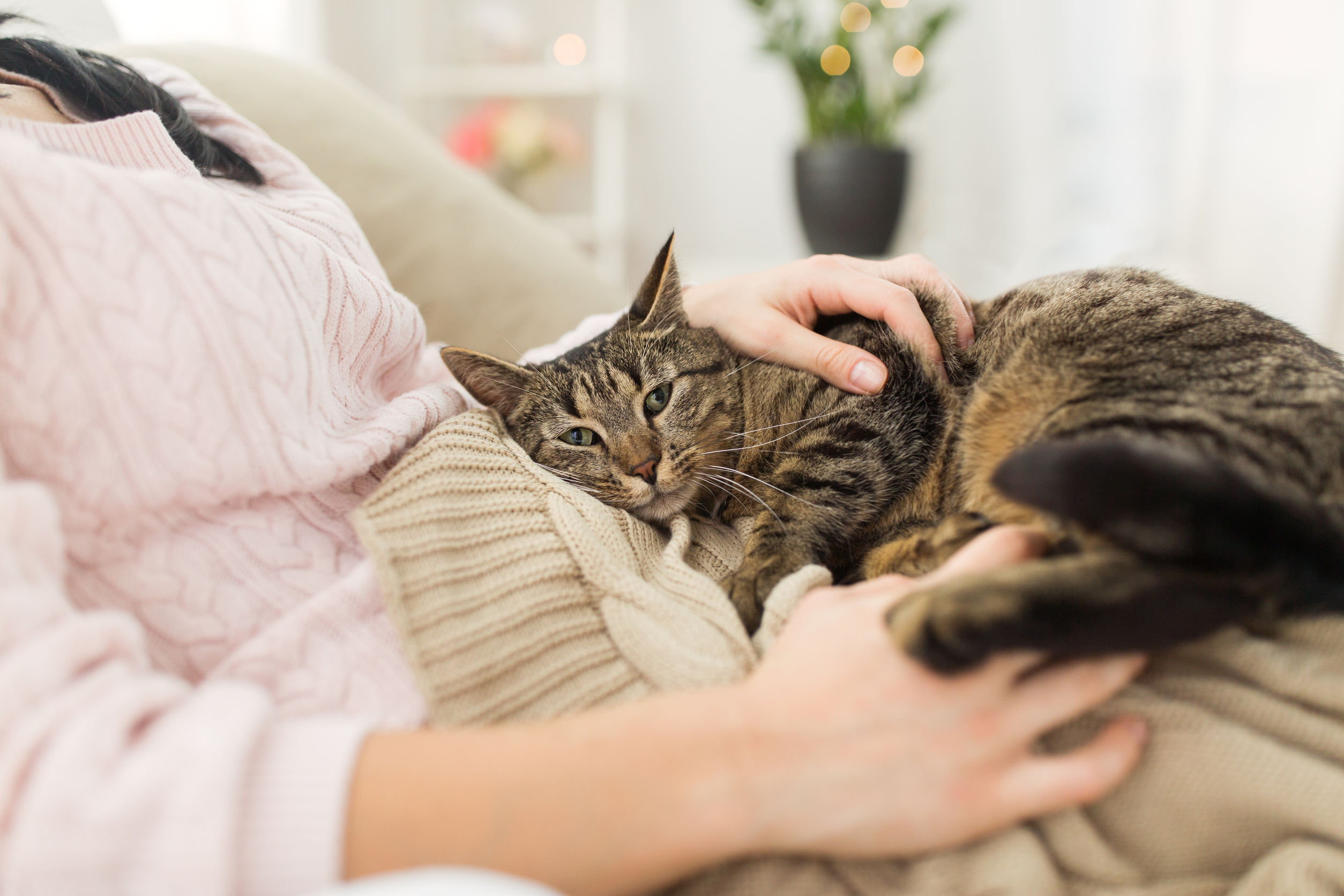 are cats loyal   Ultimate Pet Nutrition
