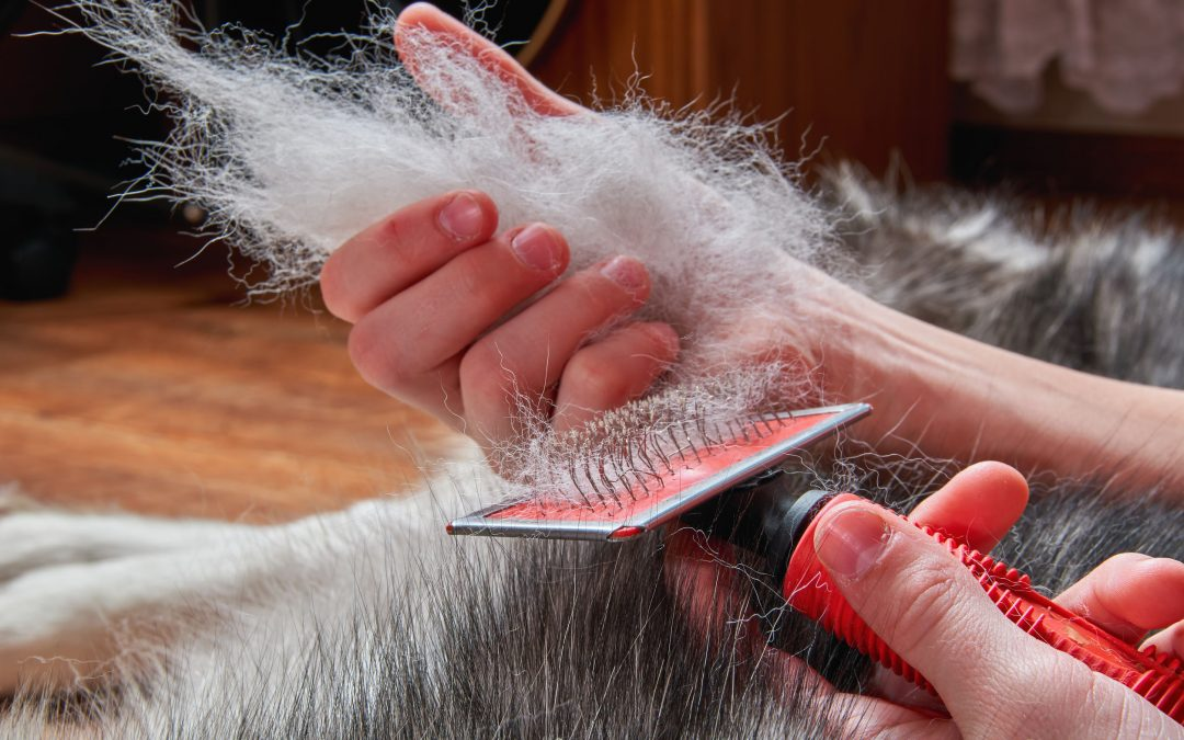 How To Deshed Your Dog And Why You Should Always Do It