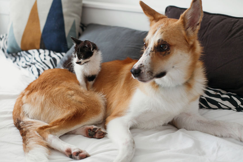 introducing kitten to dog   Ultimate Pet Nutrition