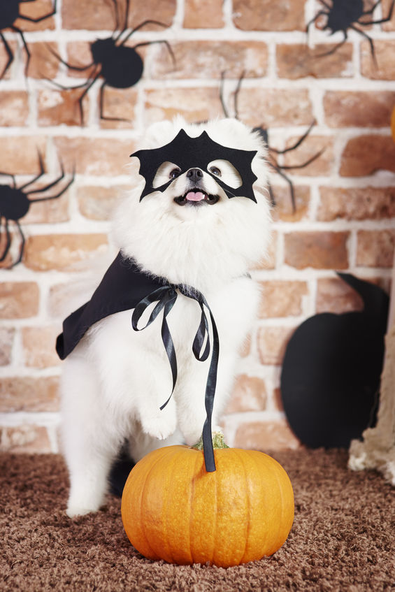 halloween dog | Ultimate Pet Nutrition