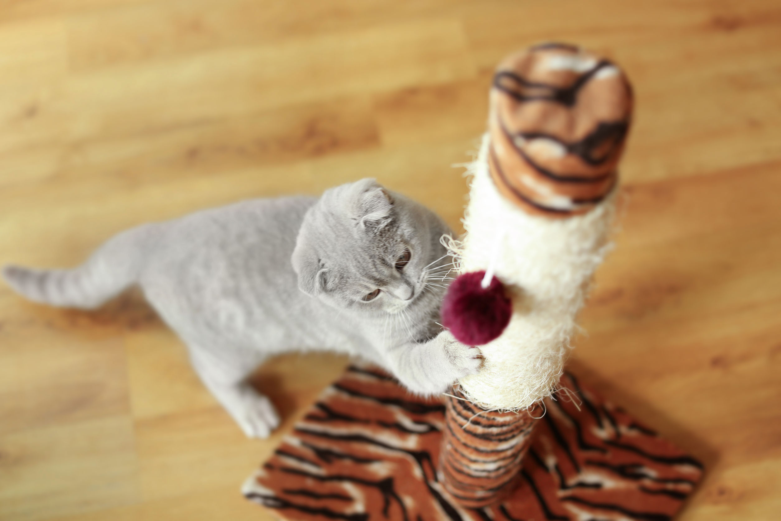 diy cat scratching   Ultimate Pet Nutrition