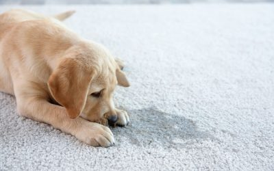 how to stop a dog from urinating indoors | Ultimate Pet Nutrition