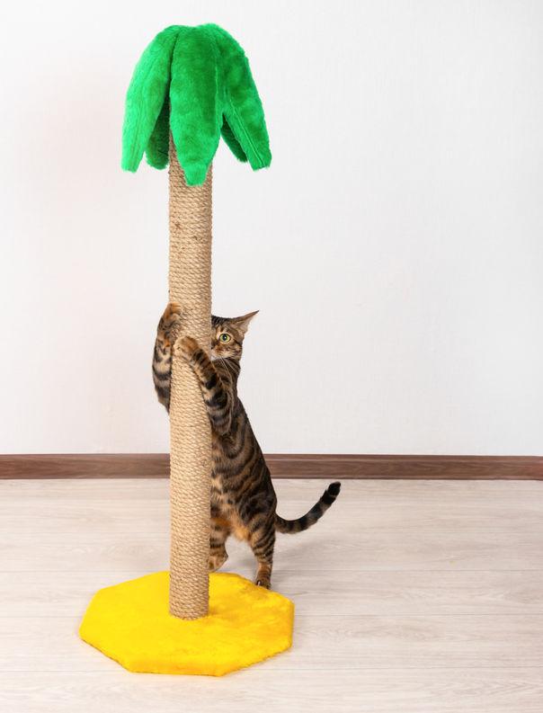 cat enrichment | Ultimate Pet Nutrition