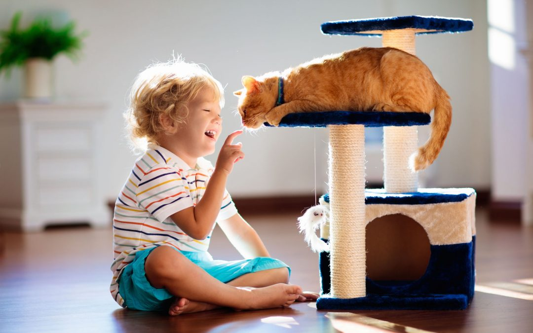 Changes In Environment For Cat Enrichment