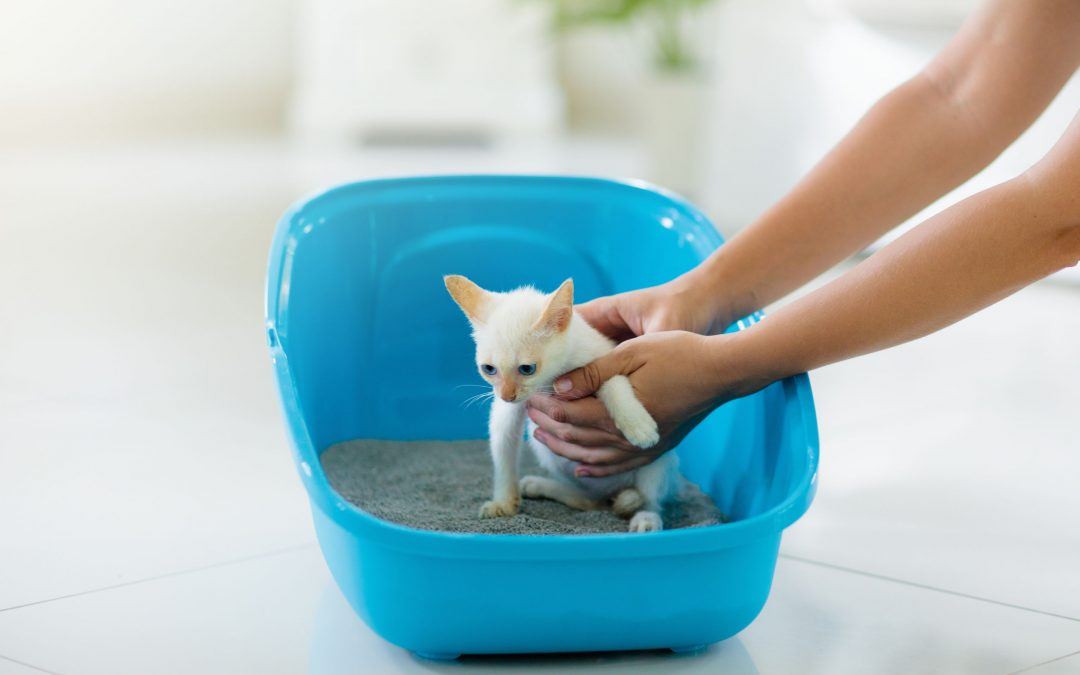 How To Potty Train A Kitten: Litter Training Your New Cat