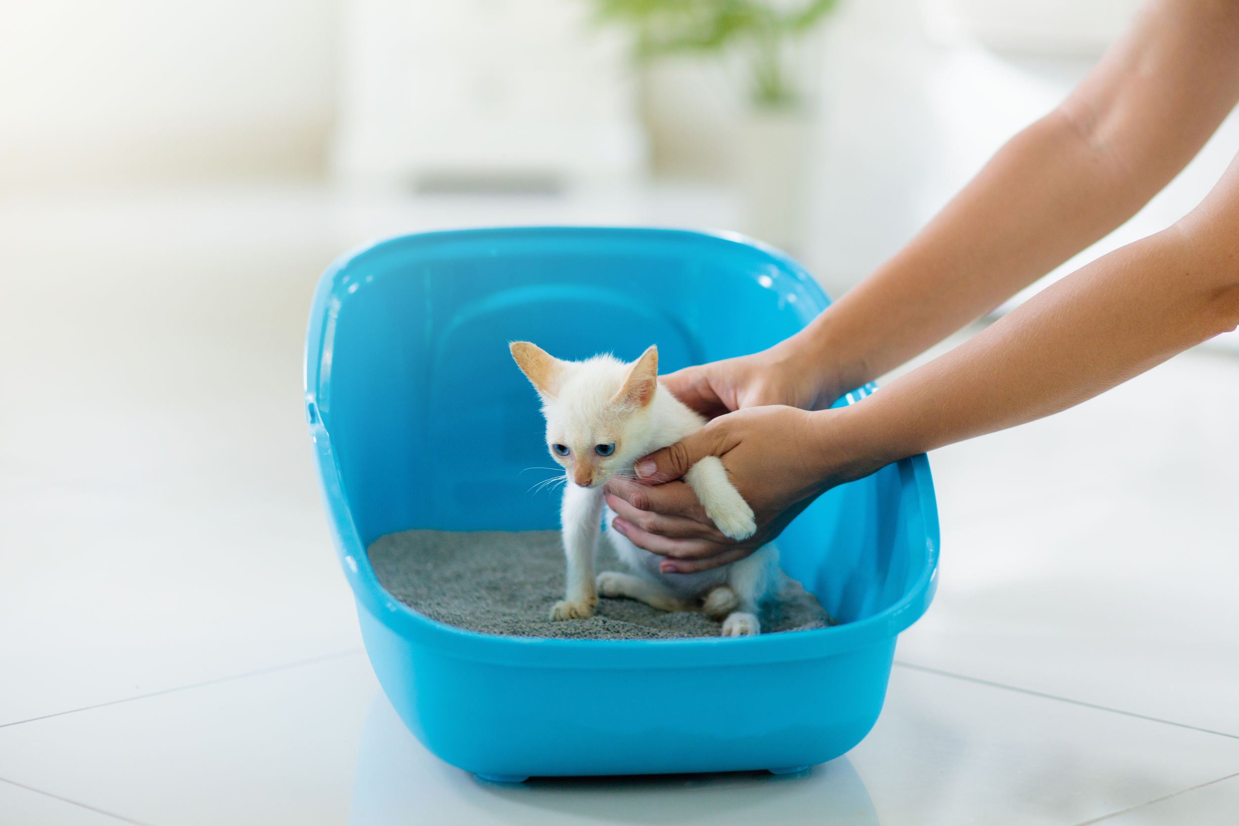 how to potty train a kitten   Ultimate Pet Nutrition
