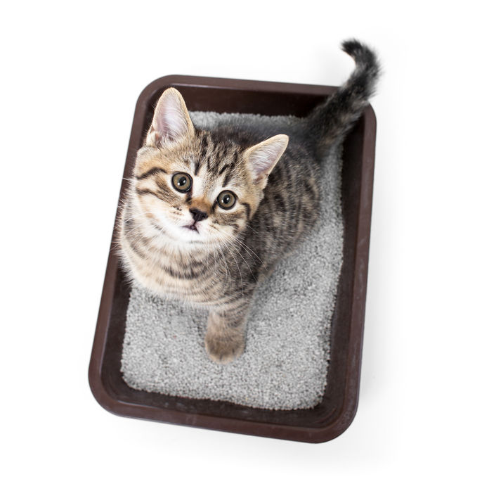 how to potty train a kitten | Ultimate Pet Nutrition