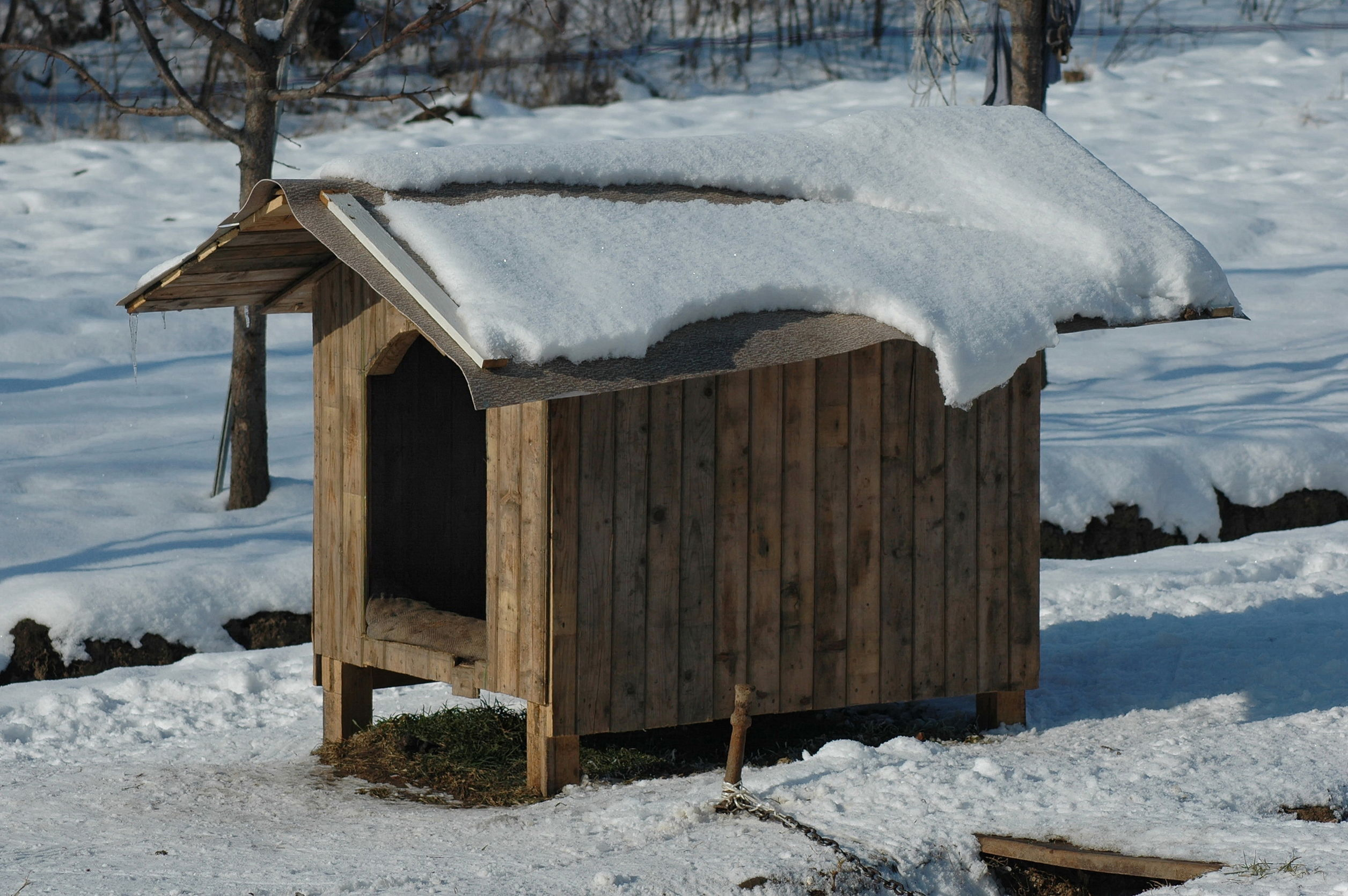how to keep a dog house warm in the winter   Ultimate Pet Nutrition