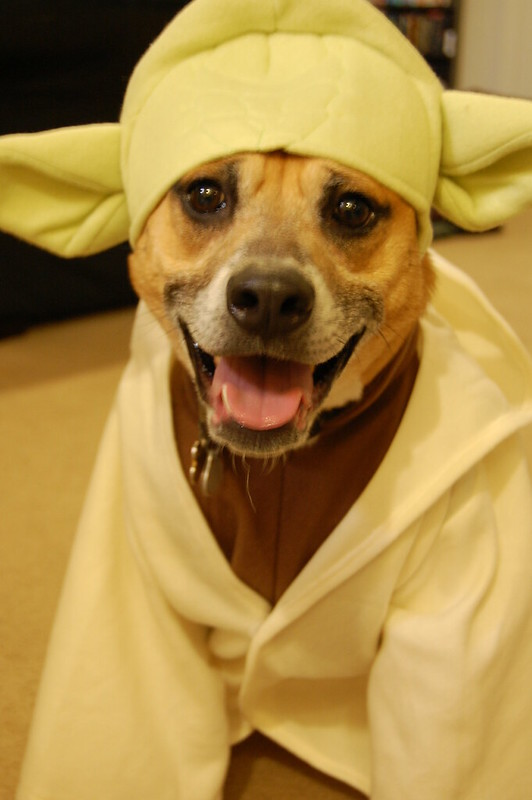 dog costumes for halloween | Ultimate Pet Nutrition
