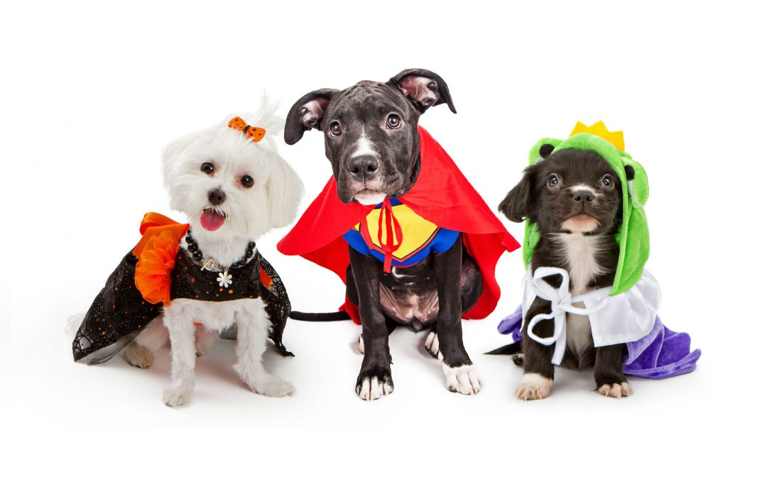 How To Throw The Perfect Halloween Dog Party