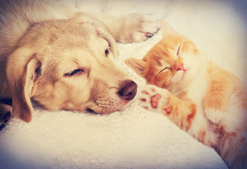 introducing kitten to dog | Ultimate Pet Nutrition