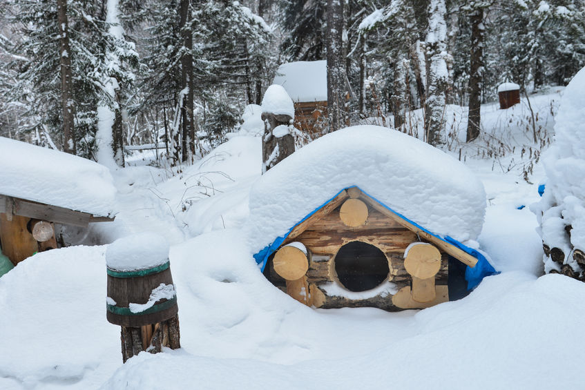 how to keep a dog house warm in the winter | Ultimate Pet Nutrition