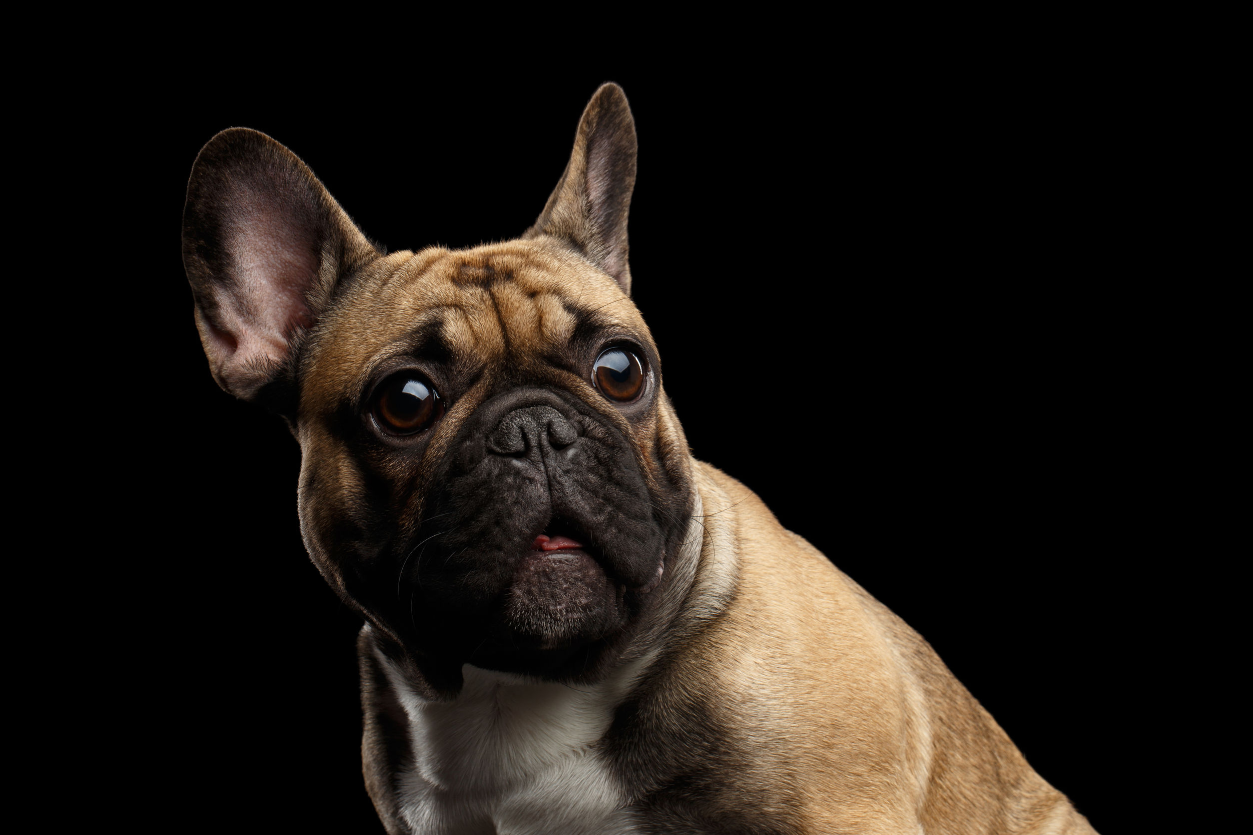 what can i give my dog for anxiety   Ultimate Pet Nutrition