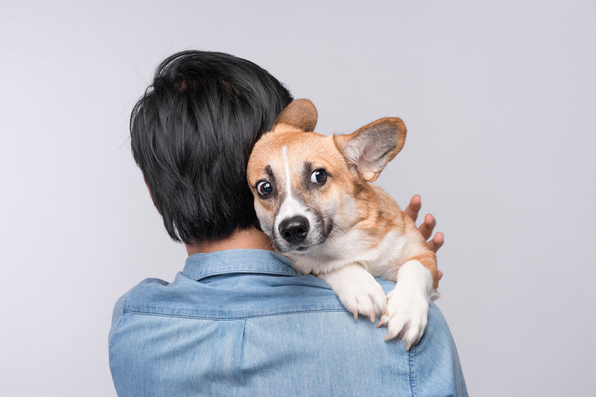 what can i give my dog for anxiety | Ultimate Pet Nutrition