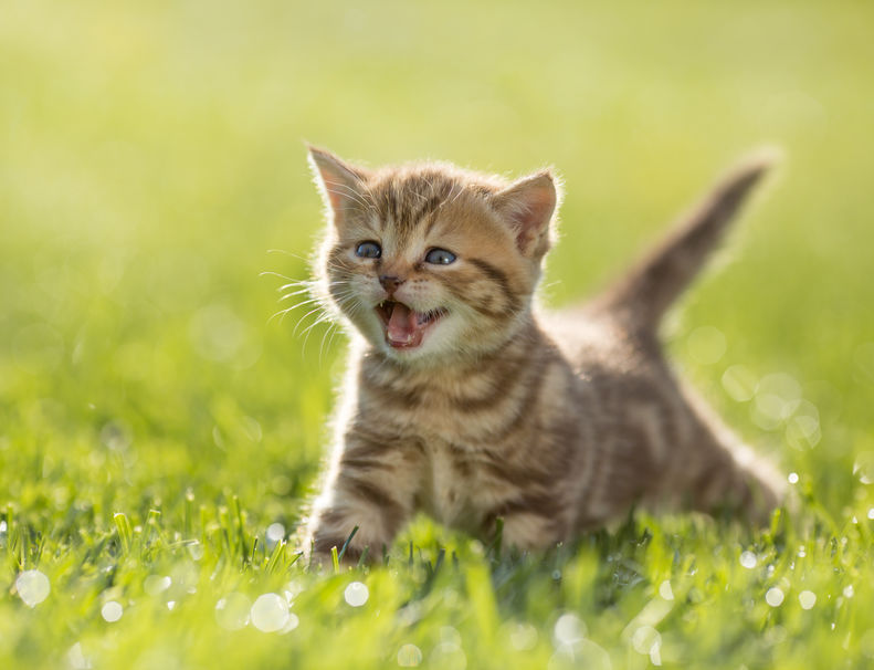 cat sounds and what they mean | Ultimate Pet Nutrition