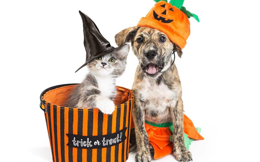 Halloween Animal Safety: Tips To Keep Your Pet Safe