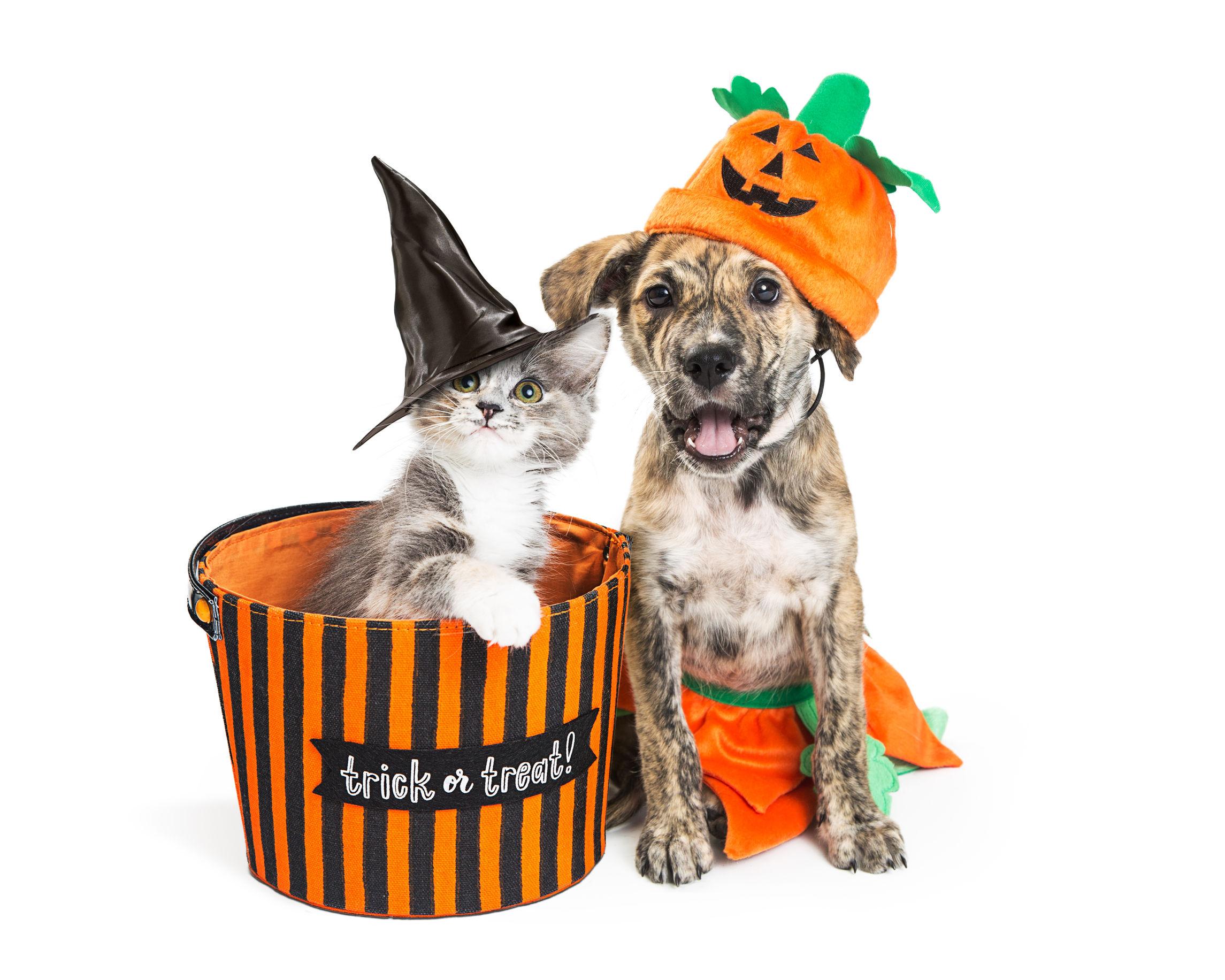 halloween animal   Ultimate Pet Nutrition