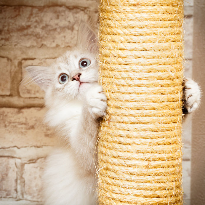 Diy Cat Scratching Posts You Can Make At Home Ultimate Pet