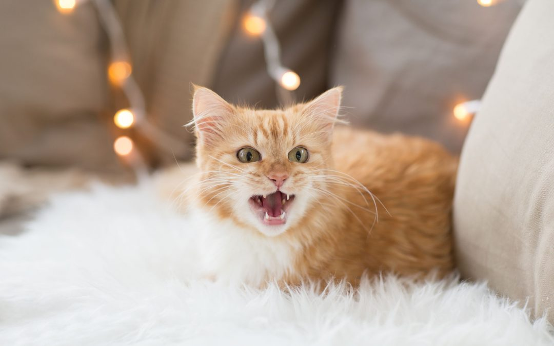 Different Cat Sounds And What They Mean