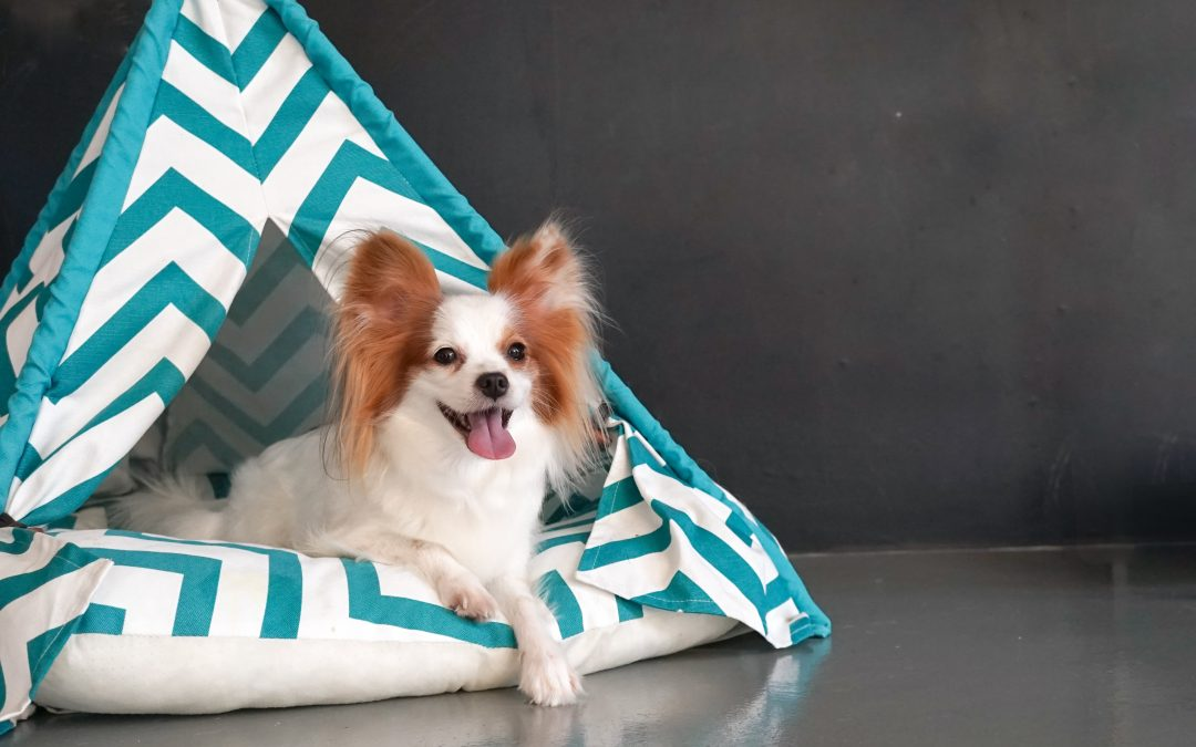 DIY Pets: How To Make a Stylish Dog Or Cat Teepee