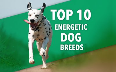 A List Of The 10 Most Energetic Dog Breeds