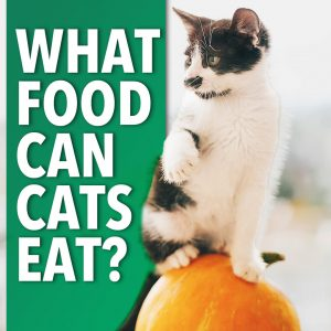 foods cats can eat | Ultimate Pet Nutrition