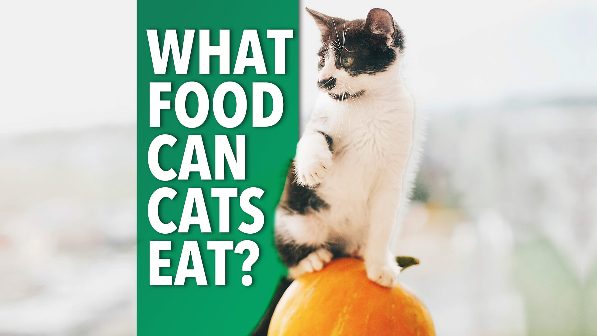 foods cats can eat   Ultimate Pet Nutrition
