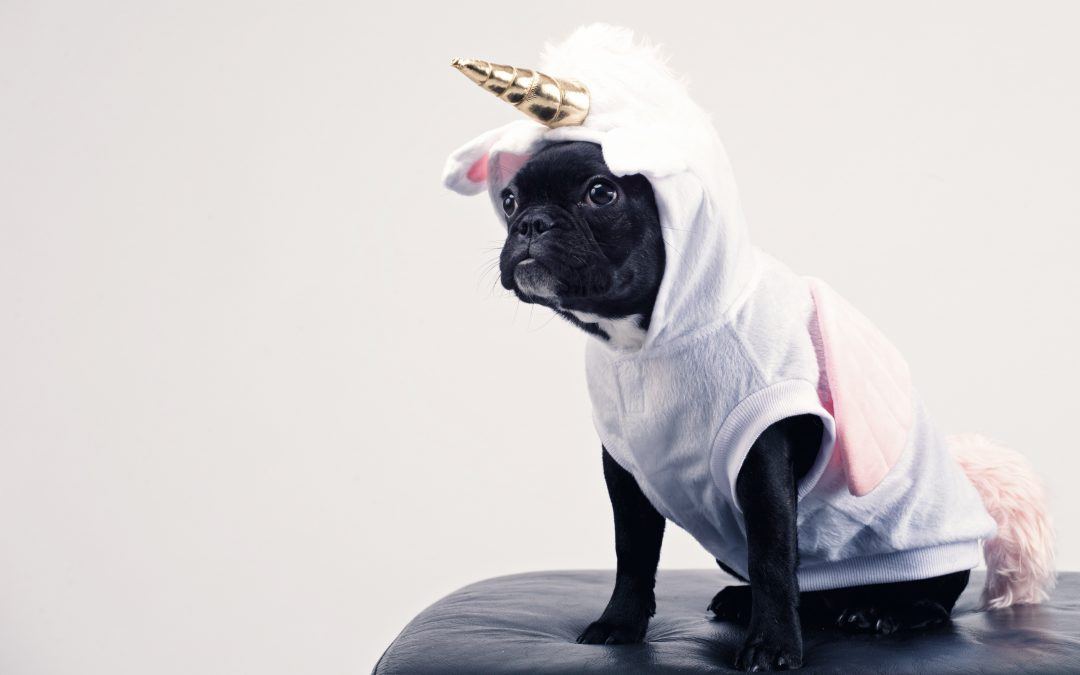 DIY Pets: Cute Cat And Dog Costumes For Halloween