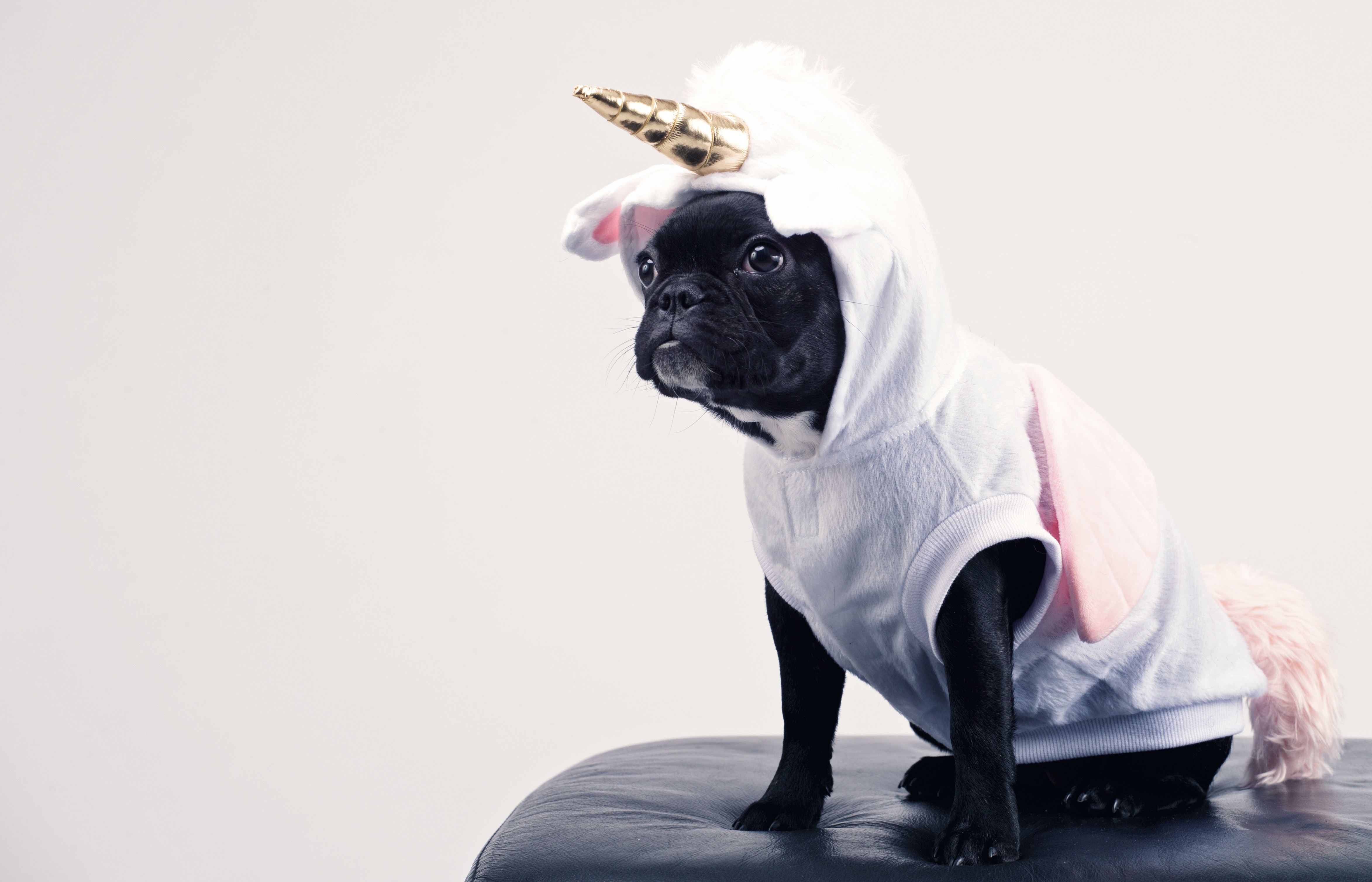 dog costumes for halloween   Ultimate Pet Nutrition