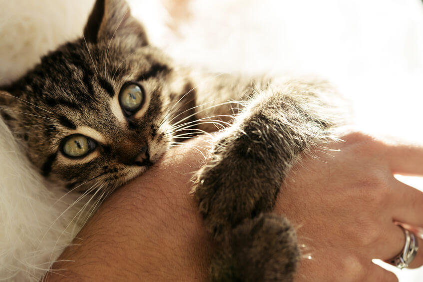 How To Stop A Cat From Biting: Tips And Tricks