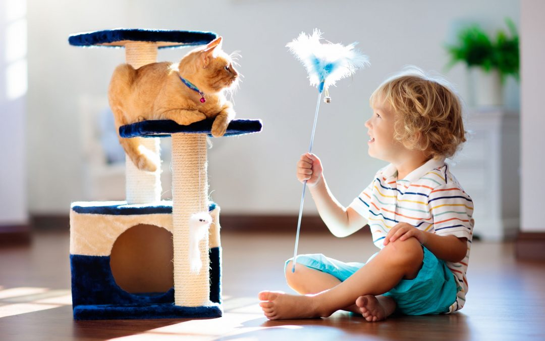 Fun Things To Do With Your Cat To Help Keep Them Active