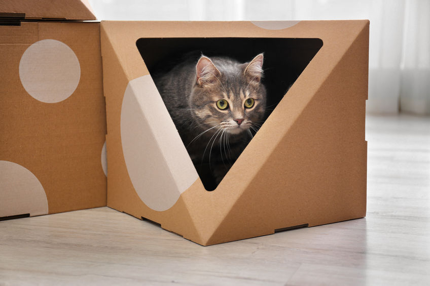 fun things to do with your cat | Ultimate Pet Nutrition