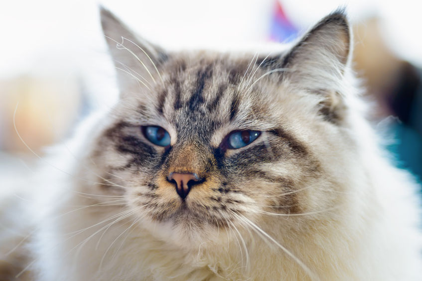 cats big eyes | Ultimate Pet Nutrition