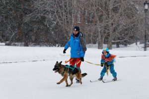 Adult and child on cross country skis, with dog