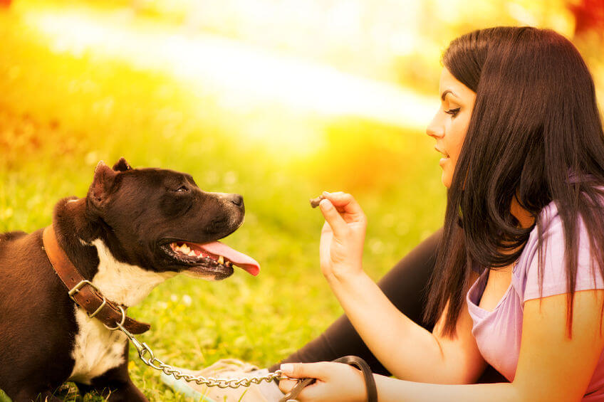 Dog Training Tools: These Items Can Help Dog Owners Train
