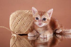 5837394 - baby kitten and sisal yarn