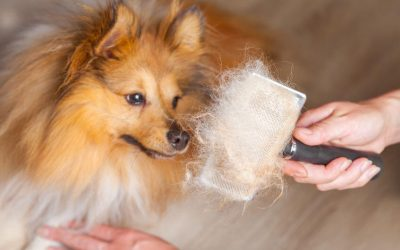 """Dog Shedding """"Remedies"""" For Your Home"""