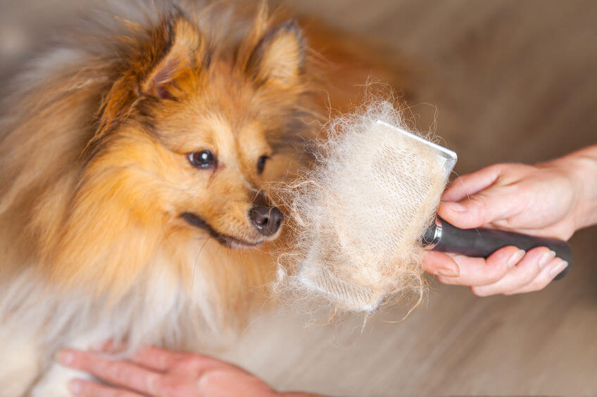 "Dog Shedding ""Remedies"" For Your Home"