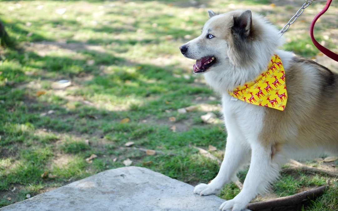 Info For All Dog Owners: What Is The Yellow Dog Project All About?