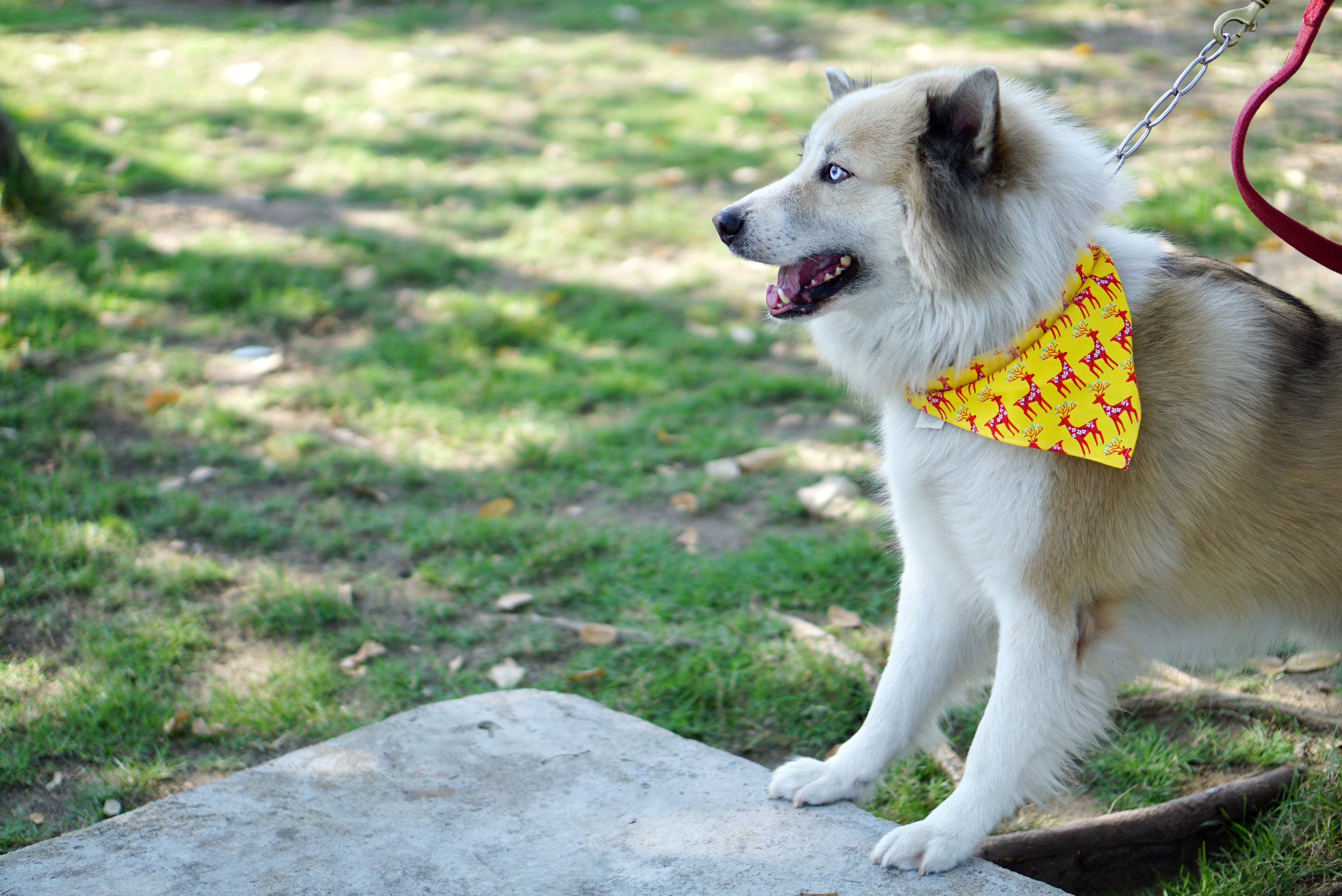 yellow dog project   Ultimate Pet Nutrition